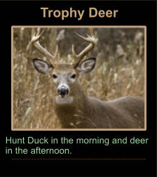 Trophy Deer Hunt Duck in the morning and deer in the afternoon.